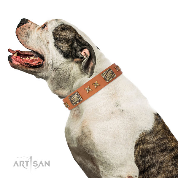 Everyday use dog collar with inimitable adornments
