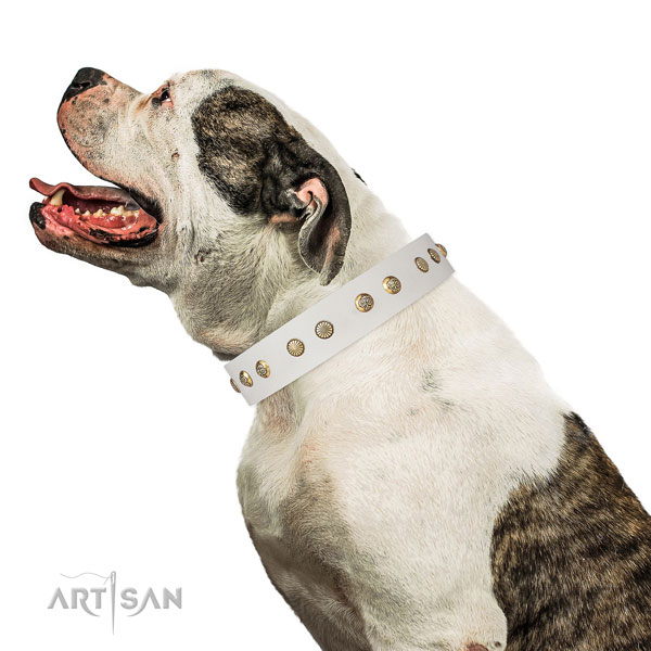 Awesome adornments on comfy wearing natural genuine leather dog collar