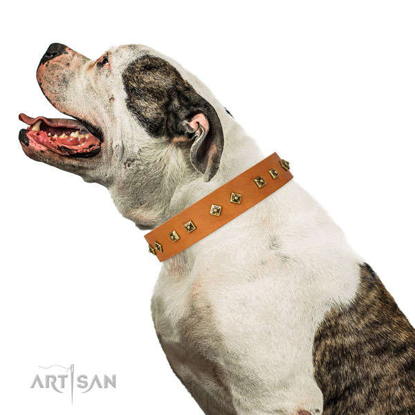 Designer adornments on basic training dog collar