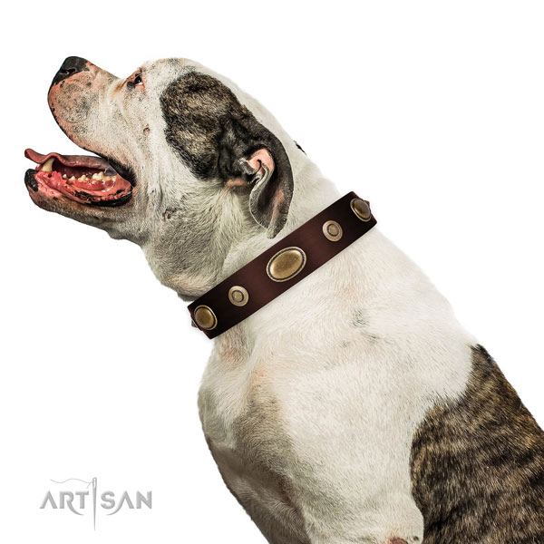 Everyday walking dog collar of natural leather with fashionable adornments
