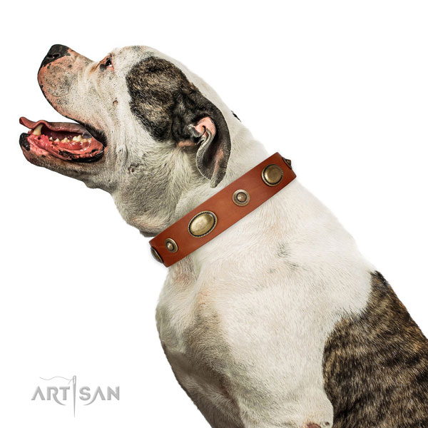 Comfy wearing dog collar of natural leather with exceptional adornments