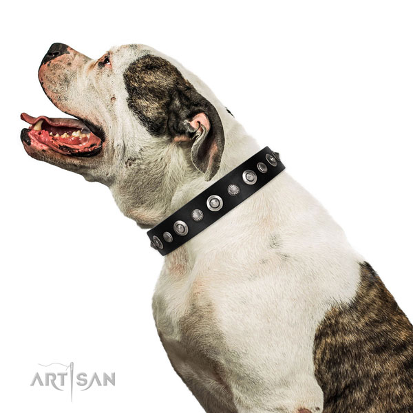 Best quality full grain leather dog collar with inimitable adornments
