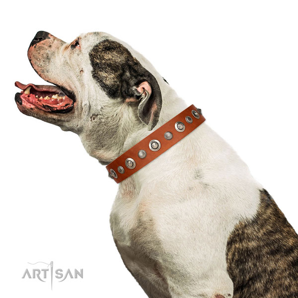 Reliable leather dog collar with incredible adornments