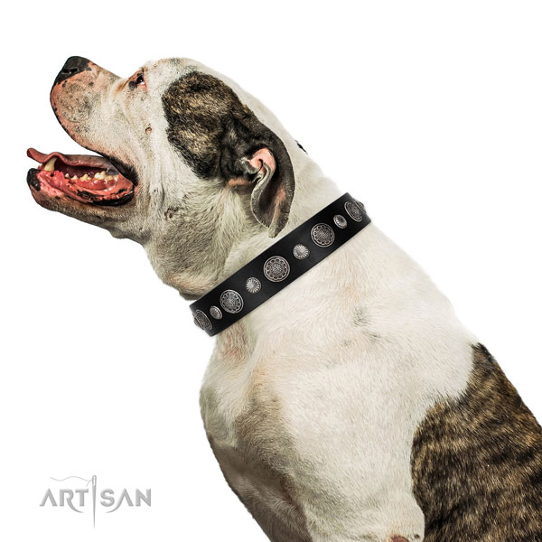 Full grain genuine leather collar with corrosion proof fittings for your handsome doggie