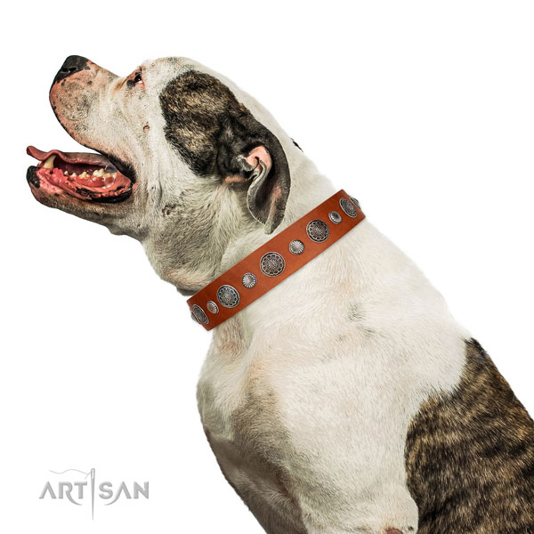 Fashionable genuine leather dog collar with rust resistant hardware
