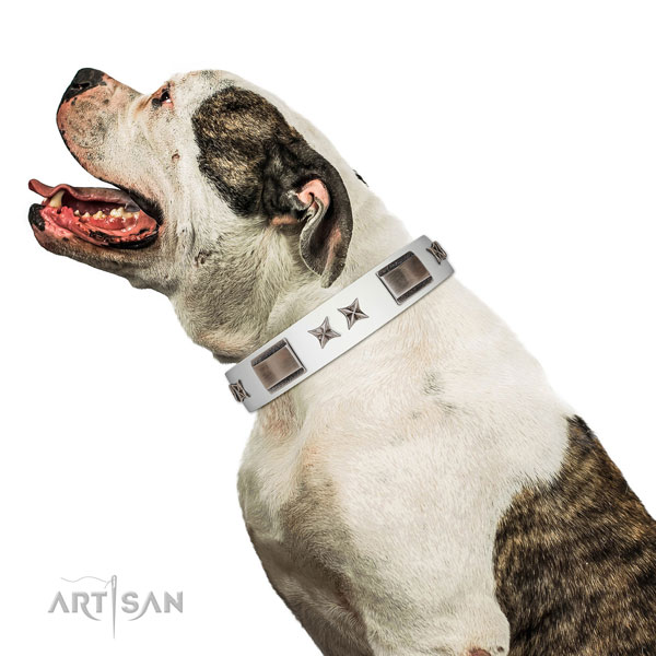 Top quality collar of genuine leather for your stylish pet