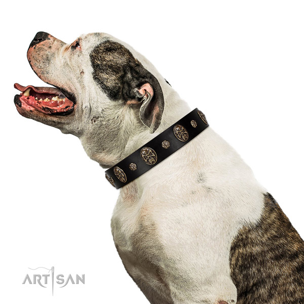 Easy wearing dog collar of natural leather with fashionable adornments