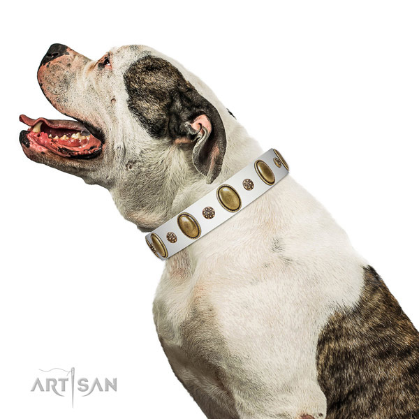 Everyday walking best quality leather dog collar