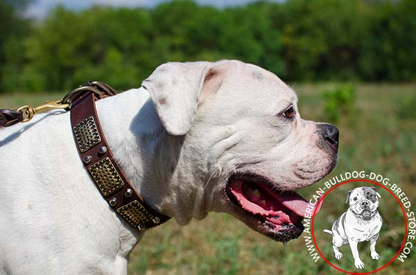 Adjustable in Size Dog Collar with Brass Non-corrosive Hardware