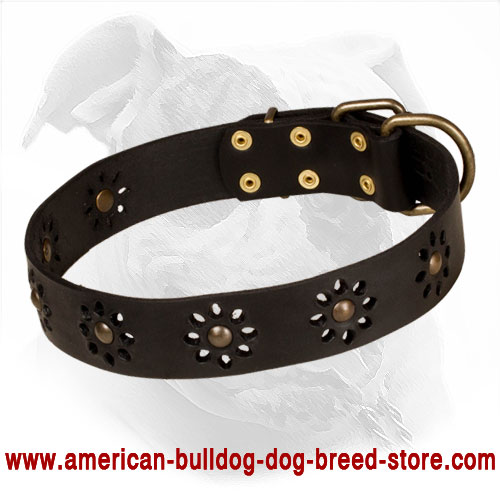 Punched Leather American Bulldog Collar