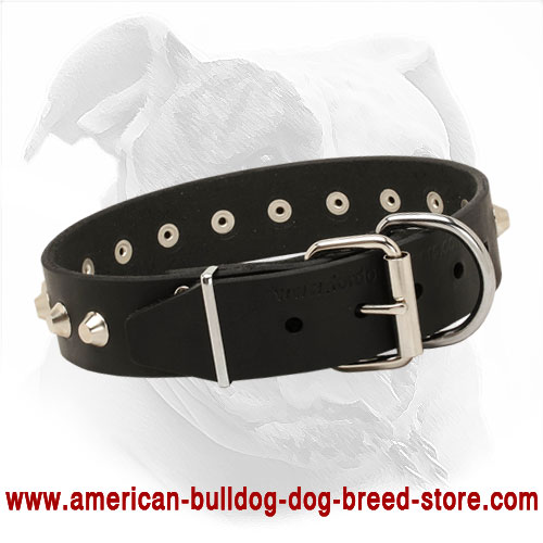 Leather American Bulldog Collar with Buckle