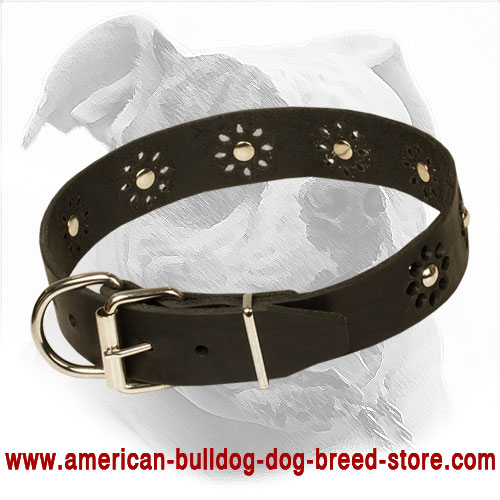 Leather American Bulldog Collar with Strong Buckle