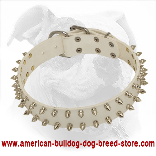 Strong White Leather American Bulldog Collar