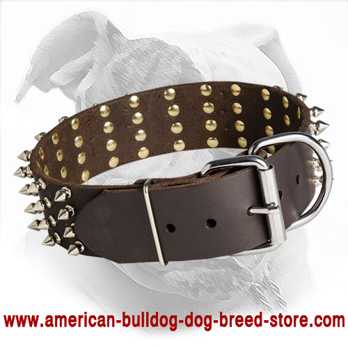 Riveyed Leather American Bulldog Collar