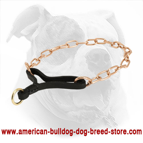 Strong Martingale Dog Collar for American Bulldog