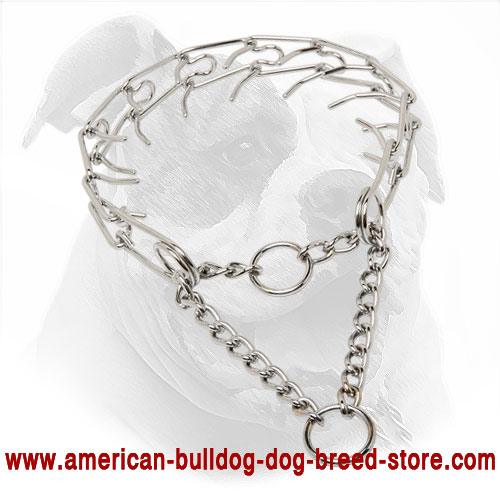 Strong Pinch American Bulldog Collar