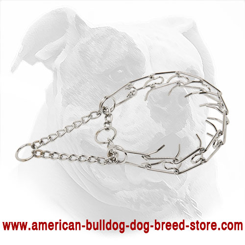 Pinch Dog Collar for American Bulldog