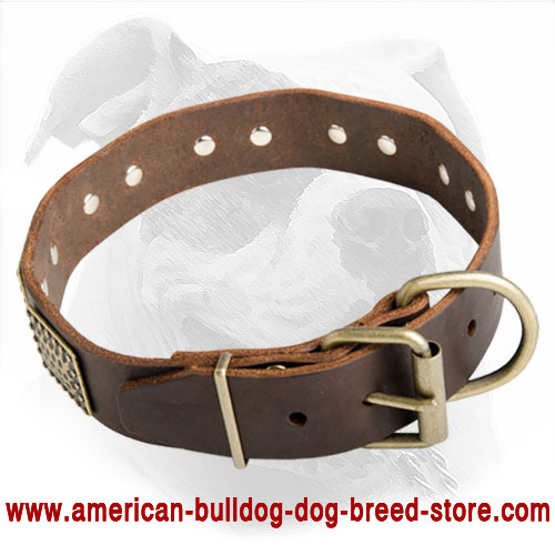 american bulldog collars luxury leather dog collar with curved massive plates for 8397
