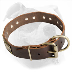 Training and Walking Leather Collar for American Bulldog