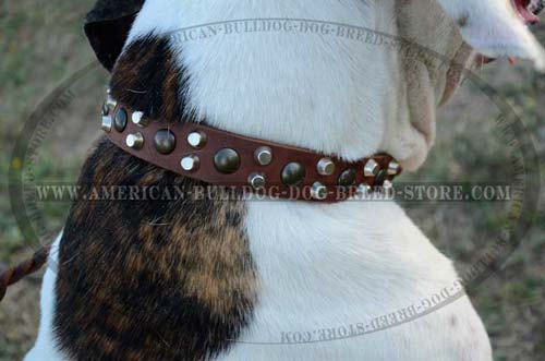 High Quality Leather Dog Collar Provides Maximum Comfort for the American Bulldog
