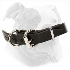 American Bulldog Collar made of high quality materials