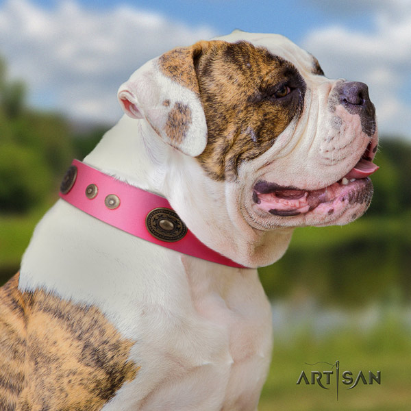 American Bulldog stunning leather dog collar with studs for daily use
