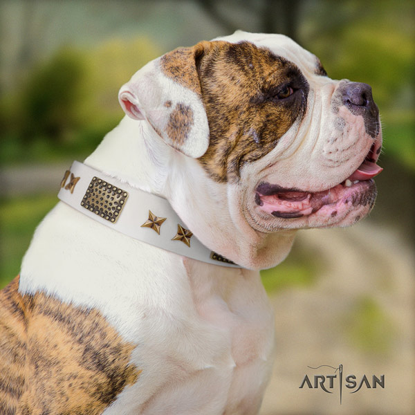American Bulldog stylish leather dog collar with studs for everyday use