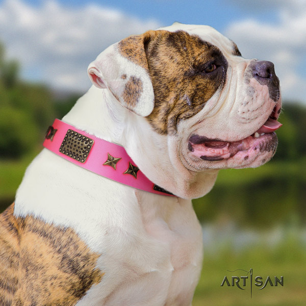 American Bulldog exquisite leather dog collar with decorations for handy use