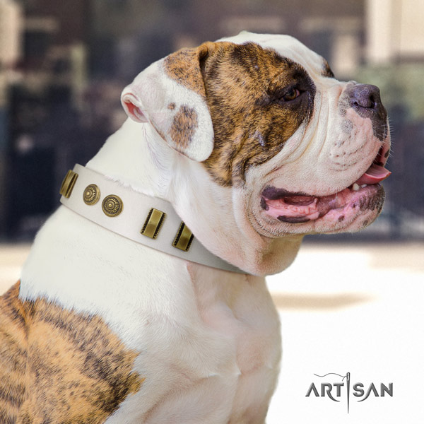American Bulldog exceptional full grain leather dog collar with studs for comfortable wearing