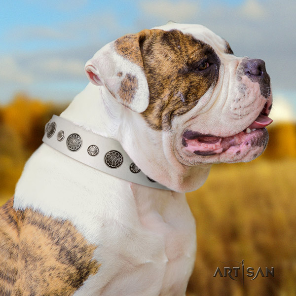 American Bulldog remarkable genuine leather dog collar with studs for fancy walking