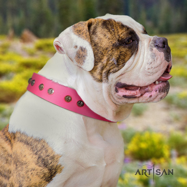 American Bulldog unusual leather dog collar with embellishments for daily walking