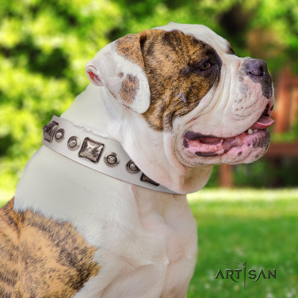 American Bulldog stunning leather dog collar with decorations for handy use