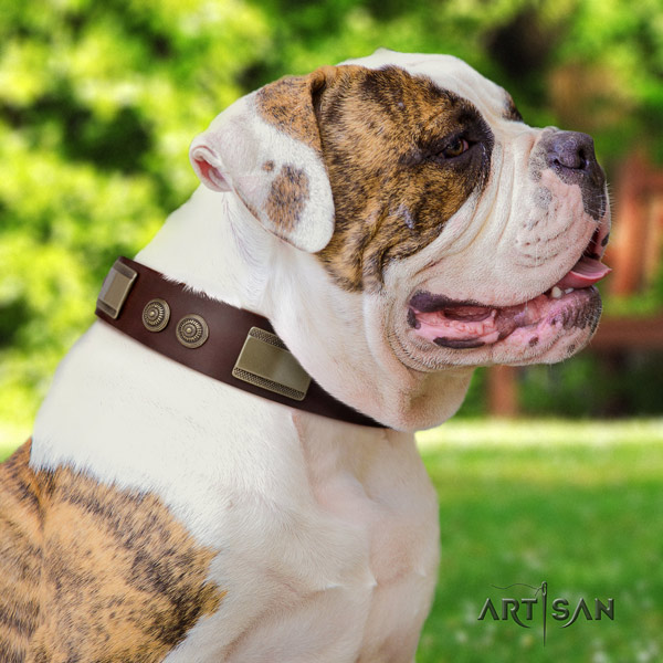American Bulldog exceptional full grain leather dog collar with adornments for easy wearing