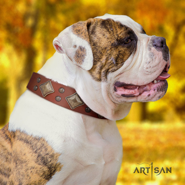 American Bulldog exquisite full grain leather dog collar with embellishments for basic training