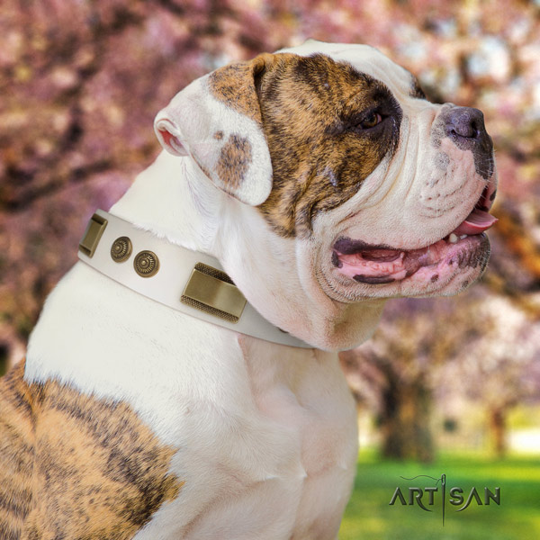 American Bulldog remarkable genuine leather dog collar with studs for everyday walking