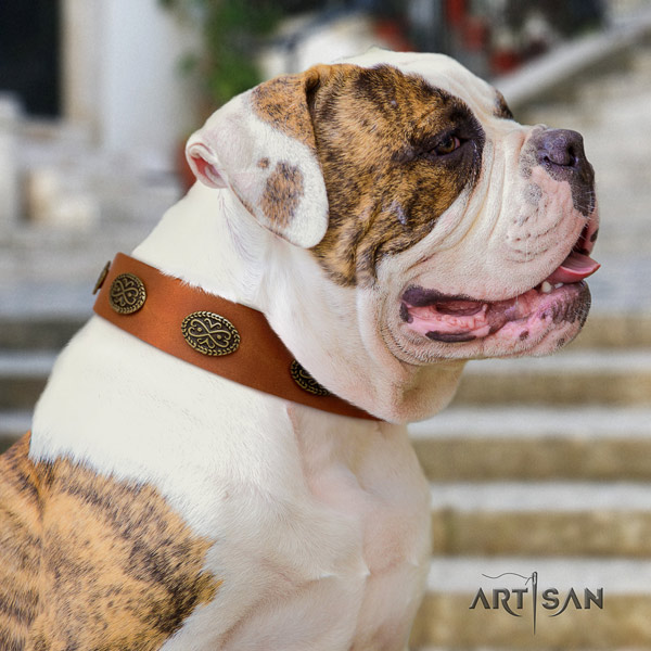 American Bulldog fashionable genuine leather dog collar with decorations for comfy wearing