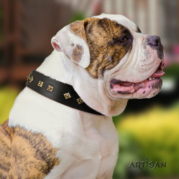 American Bulldog designer full grain leather dog collar with adornments for comfortable wearing