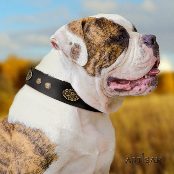 American Bulldog impressive full grain leather dog collar with decorations for walking