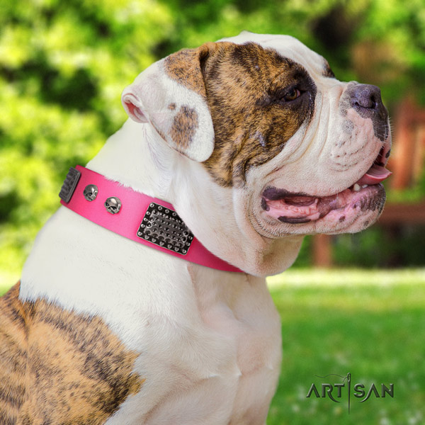 American Bulldog remarkable genuine leather dog collar with decorations for handy use