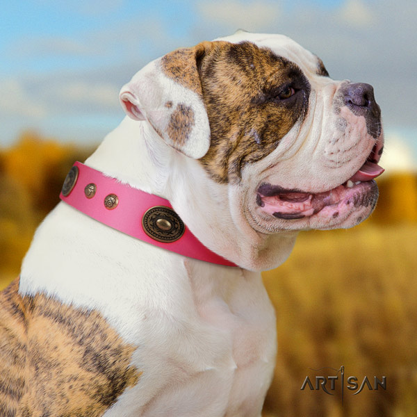 American Bulldog amazing genuine leather dog collar with decorations for everyday walking