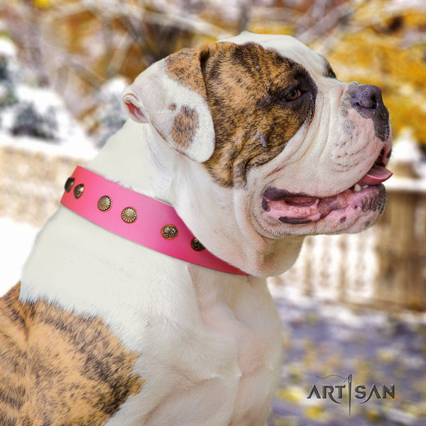 American Bulldog awesome genuine leather dog collar with embellishments for fancy walking