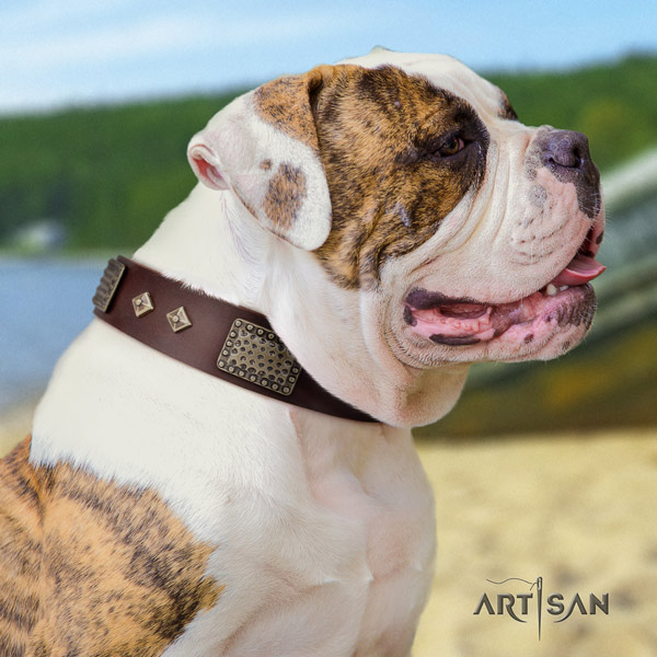 American Bulldog fashionable leather dog collar with adornments for everyday use