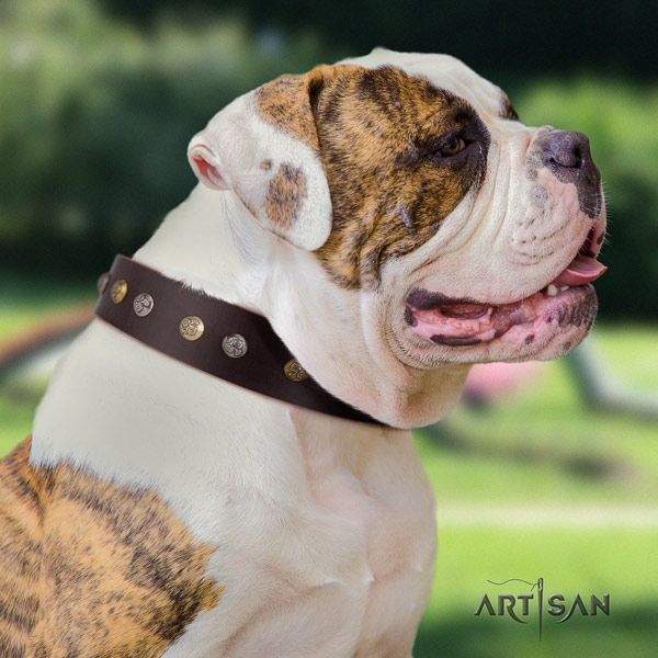 American Bulldog stunning full grain leather dog collar with decorations for daily use
