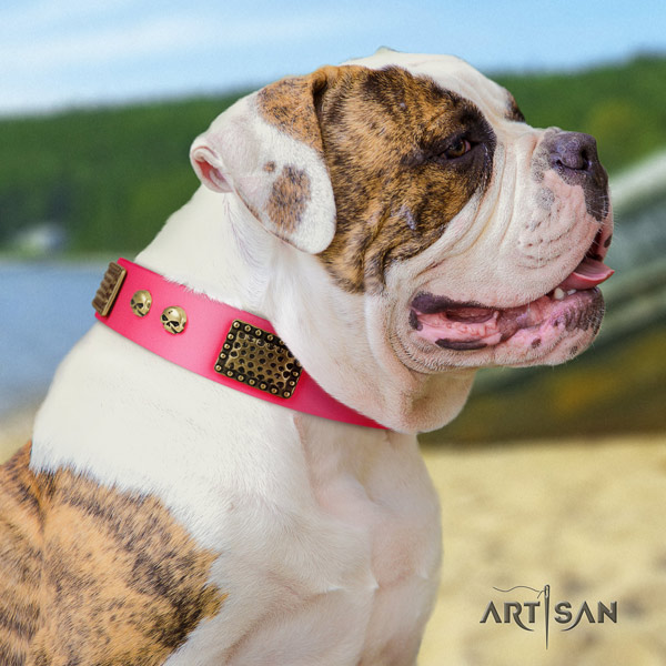 American Bulldog fashionable genuine leather dog collar with decorations for easy wearing
