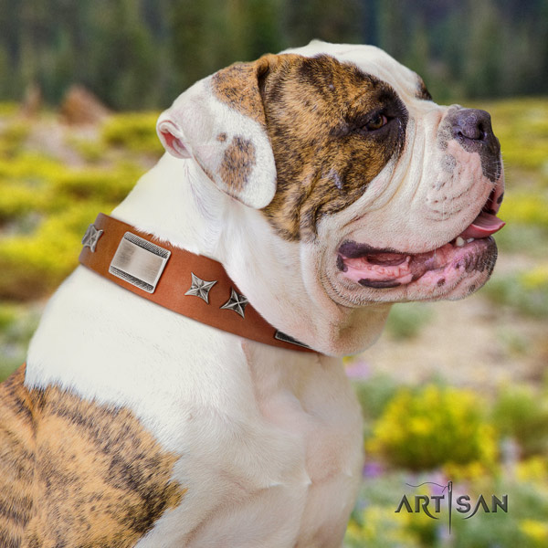 American Bulldog exquisite genuine leather dog collar with studs for fancy walking