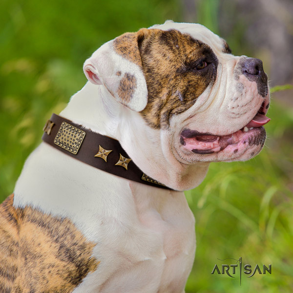 American Bulldog incredible genuine leather dog collar with decorations for fancy walking