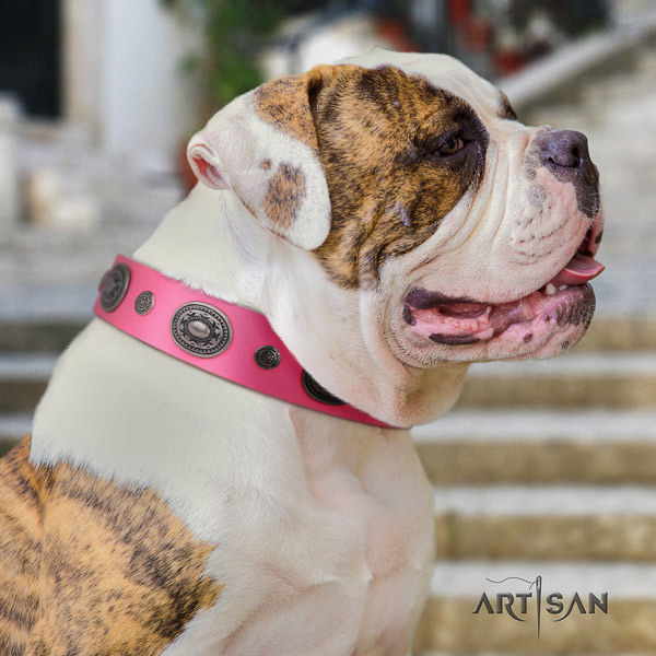 American Bulldog inimitable full grain leather dog collar with adornments for stylish walking