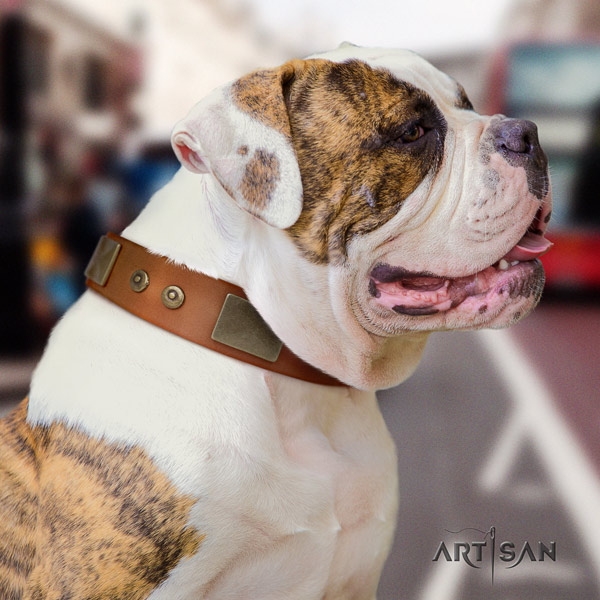 American Bulldog extraordinary leather dog collar with embellishments for comfy wearing