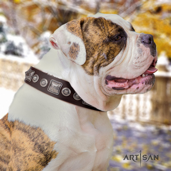American Bulldog amazing genuine leather dog collar with decorations for basic training