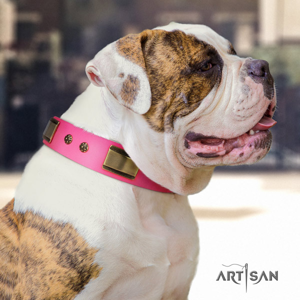 American Bulldog exquisite leather dog collar with decorations for stylish walking